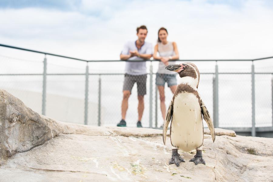 OZEANEUM Pinguinc TMV Kirchgessner inselzeitung ruegen | Inselzeitung Rügen