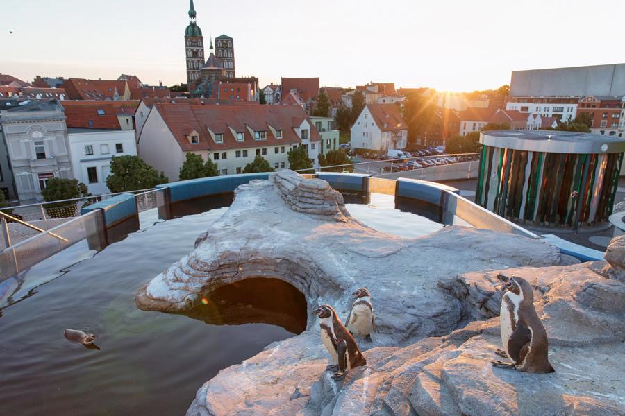 Ozeaneum Abendsonne Pinguine©AnkeNeumeister inselzeitung ruegen | Inselzeitung Rügen