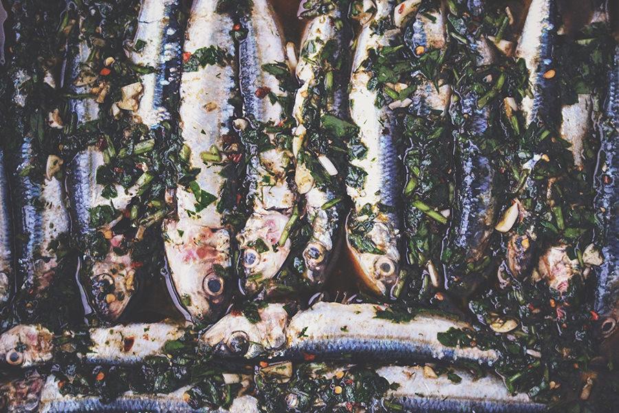 fish 1457570262432 7e4ad0c24b2f | Inselzeitung Rügen