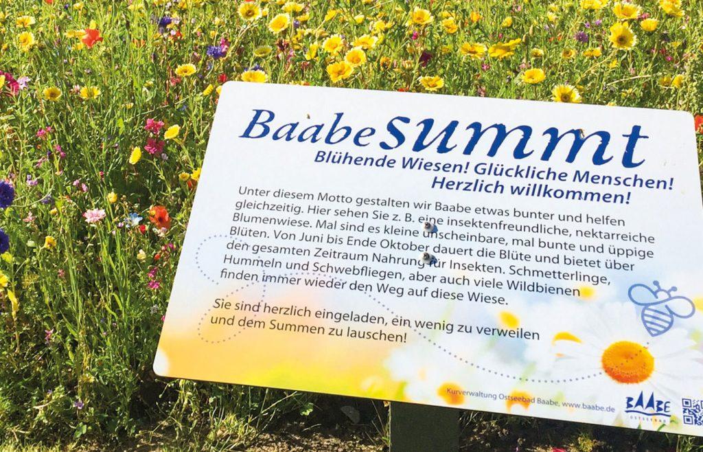 ostseebad baabe halbinsel moenchgut ruegen | Inselzeitung Rügen